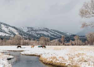 Ponies at the Snake River Sporting Club