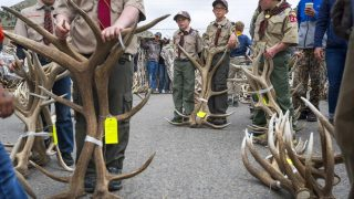 Annual Elk Antler Auction Raises Funds for Scouts, Refuge