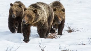 After Long Winter, Local Bears Return to the Valley