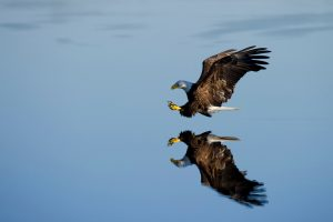 Local birds of prey will be on display at Jackson Hole Airport's Flights & Feathers Program
